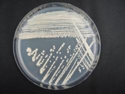 R2-8_微生物分譲制度.jpg