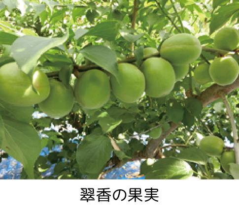 suikou_kajitsu_s.png